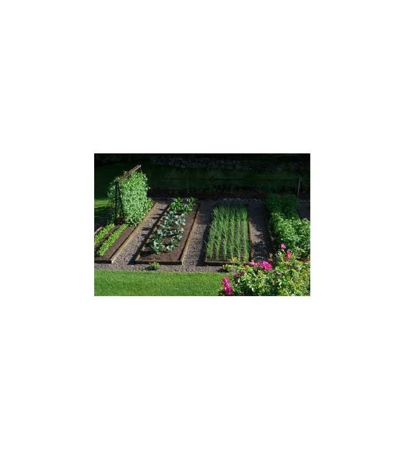 esempio di applicazione kit Irrifarma impianto irrigazione orto goccia manichetta fragole ortaggi